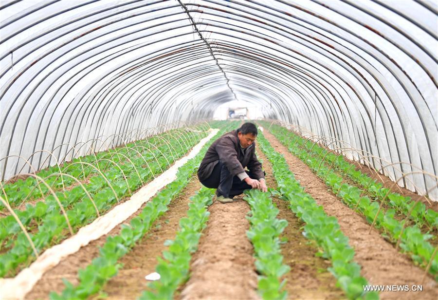 #CHINA-JINGZHE-FARM WORK (CN)