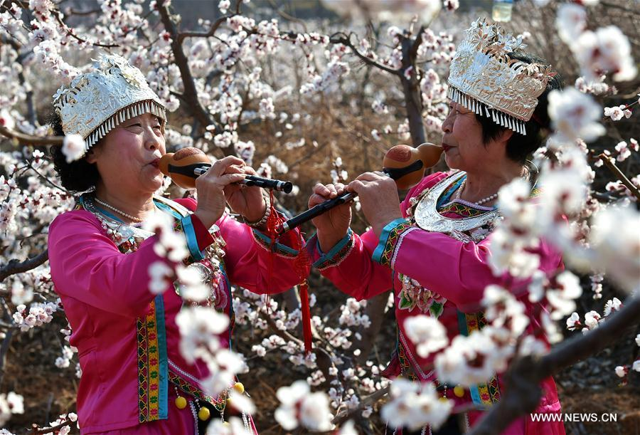 A woman takes selfie at an apricot farm in Xiaxian County under Yuncheng City, north China's Shanxi Province, March 14, 2017.
