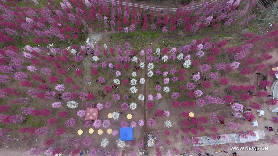 Aerial photo taken on March 22, 2017 shows peach blossoms in Hongquan Village of Zhongjiang County, southwest China's Sichuan Province.