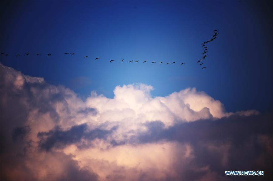 CHINA-HEILONGJIANG-MIGRANT BIRDS (CN)