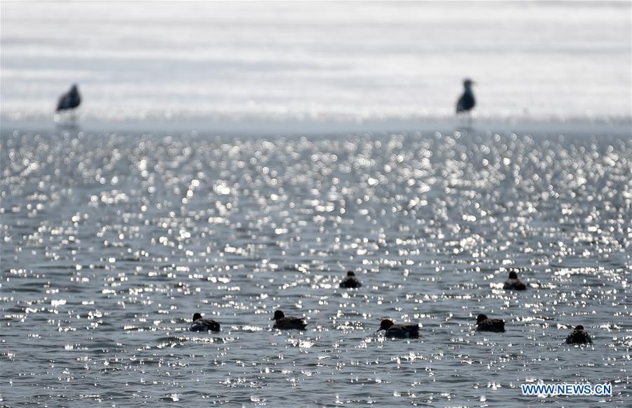 CHINA-HEILONGJIANG-XINGKAI LAKE-BIRDS(CN)