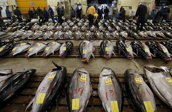 China lifts 13-year import ban on Japanese carp