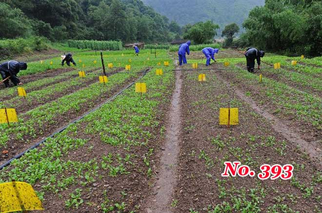 Agricultural reform key to China's prosperity