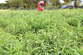 Xinhua Insight: China takes a step closer to green agriculture
