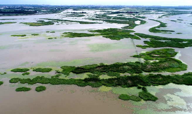 Scenery of Binjiang wetland in NE China's Harbin