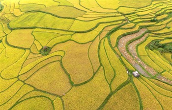 Aerial view of paddy fields in SW China's Guizhou