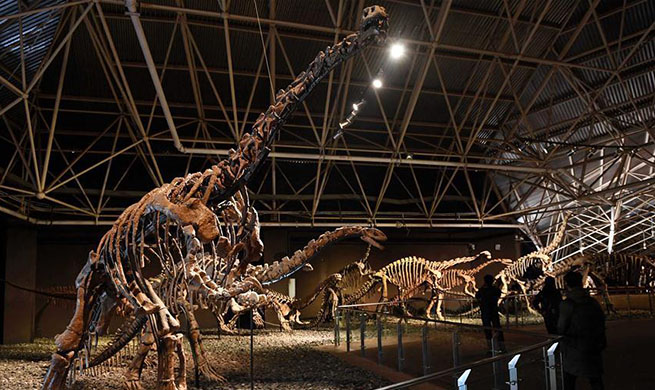 Tourists view dinosaur fossils at World Dinosaur Valley in SW China