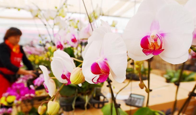 Flower exhibition in east China's Shandong attracts many customers