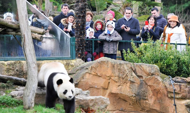 "1st panda cub born in France ""Yuan Meng"" debuts with public"