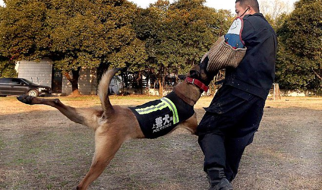 Policedogs keep daily training in cold winter