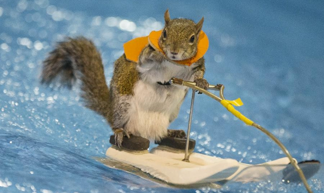 Water-Skiing Squirrel performs during 2018 Toronto Int'l Boat Show