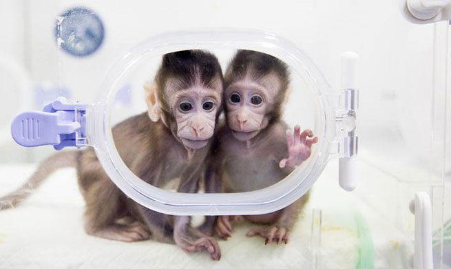 Macaque cloning breakthrough offers hope against human illnesses