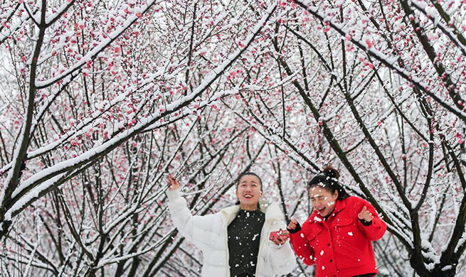 Blooming plum blossoms amid snow in east China's Jiangsu