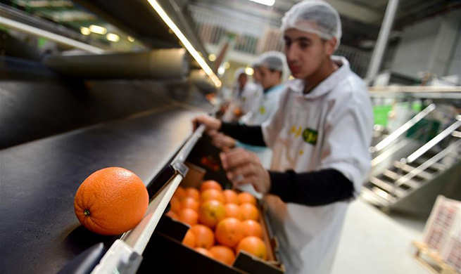 Citrus farms prosper in Egypt as country becomes 3rd largest orange exporter to China