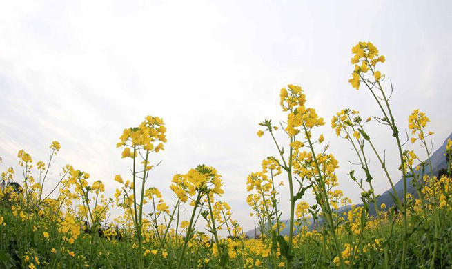 """Flowers blossom at day of """"Lichun"""" across China"""