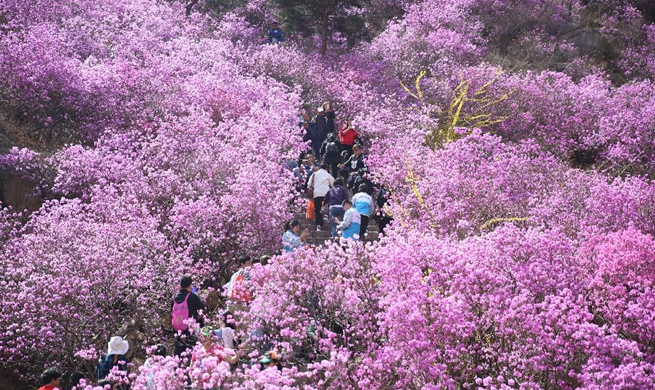 Tourists enjoy spring flowers across China