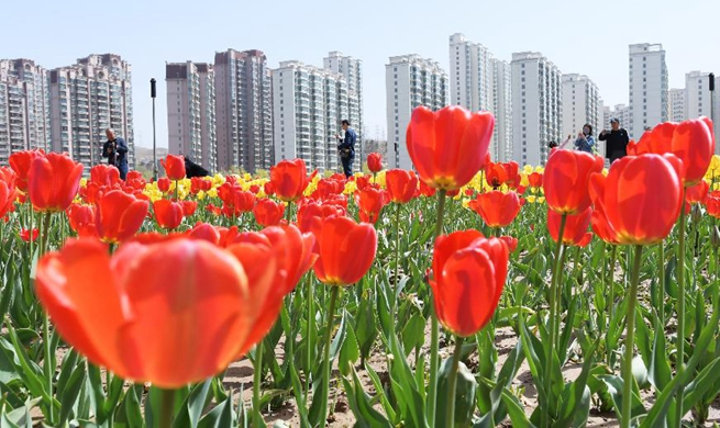 People enjoy blooming flowers across China