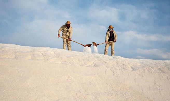 Workers collect crude salt at salt field in E China's Jiangsu