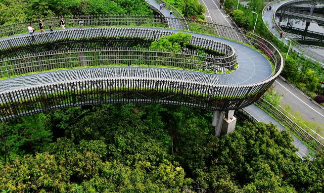 """Fudao"" skywalk built among forest in Fuzhou"
