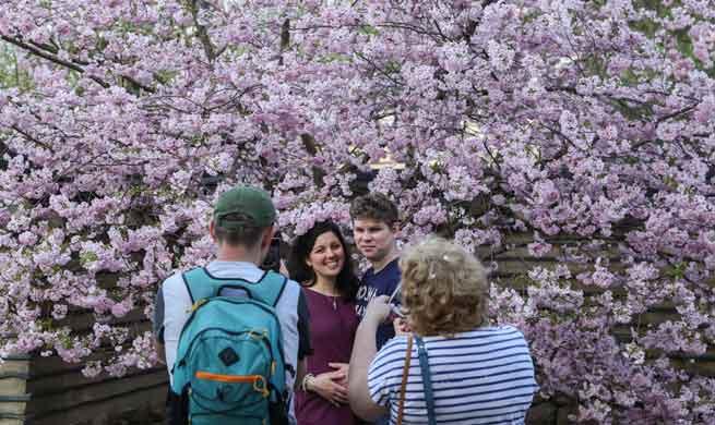 12th Cherry Blossom Festival held in eastern Berlin, Germany