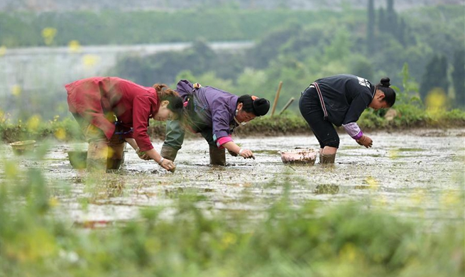 Farmers busy with planting across China around solar term Guyu