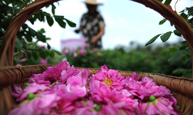Flower industry helps to improve development of SW China's county