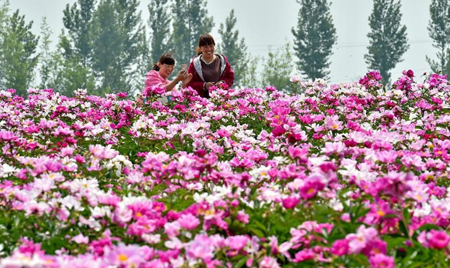Peony flowers attract tourists in N China's Shanxi