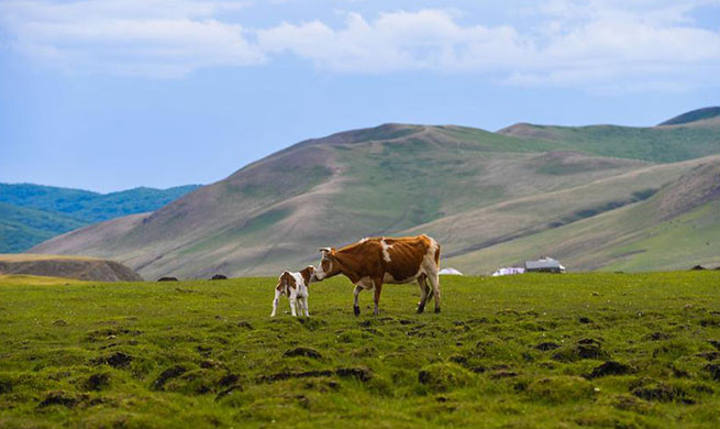 Grass on pastures of Inner Mongolia resumes growth