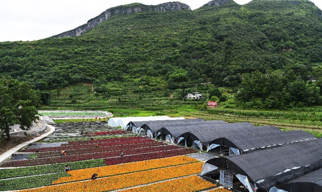 Flower planting industry helps raise villagers' income in Chongqing, SW China