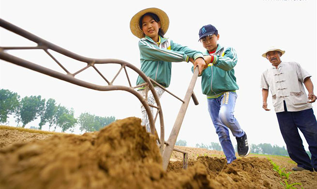 Students attend farming experience activity in N China's Hebei