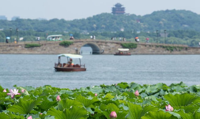 Lotus flowers draw tourists at West Lake scenic area in Hangzhou