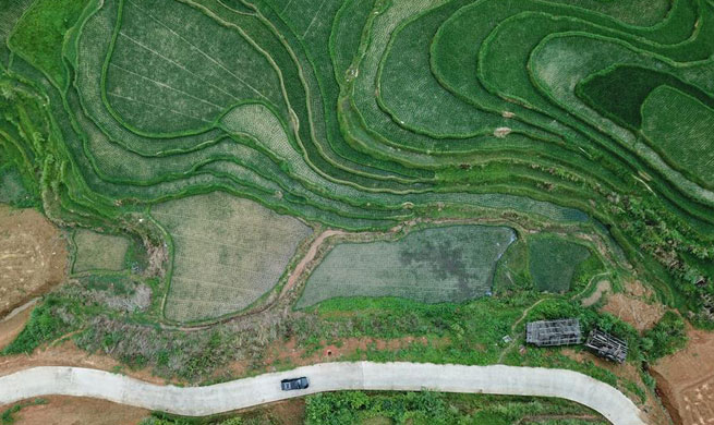 Scenery of Wuniangxi terraced field in SW China's Guizhou