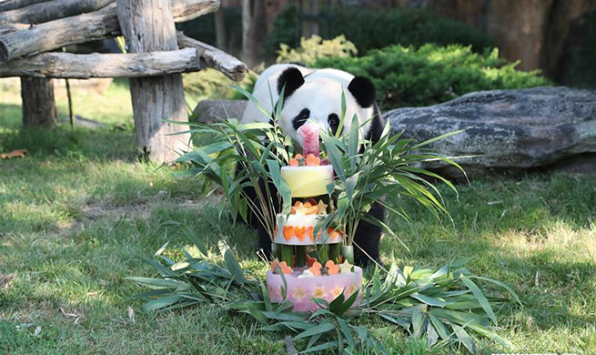 France's Yuan Meng panda celebrates first anniversary