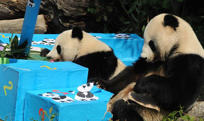 Twin giant pandas celebrate second birthday in Austria