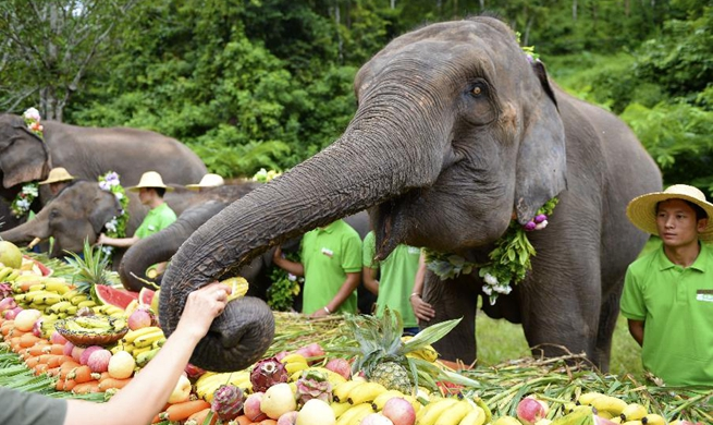 World Elephant Day celebrated in SW China's Yunnan