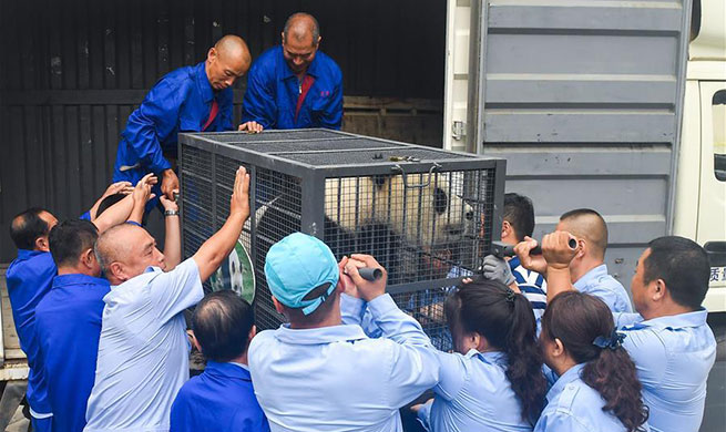 Giant pandas start journey back to Sichuan for 2019 breeding program from China's Jilin