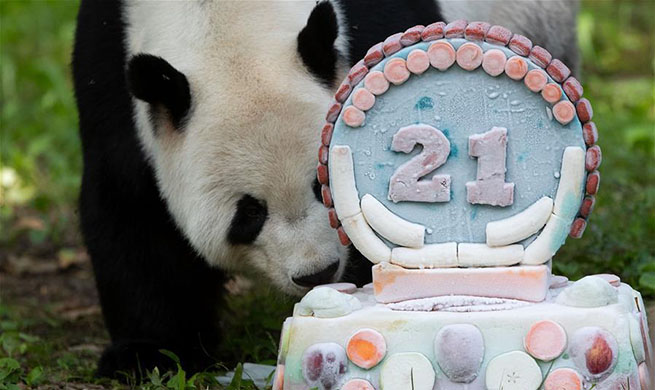 Giant panda Tian Tian celebrates 21st birthday in U.S.