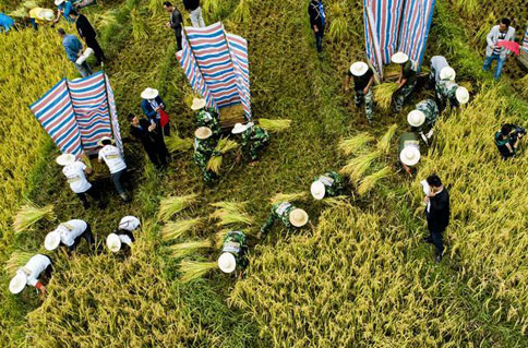Colorful autumn! Bird's-eye view of fall harvest in China