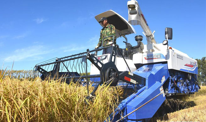 Rice harvest season begins in NE China's Heilongjiang