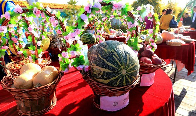 People celebrate harvest in NW China's Gansu