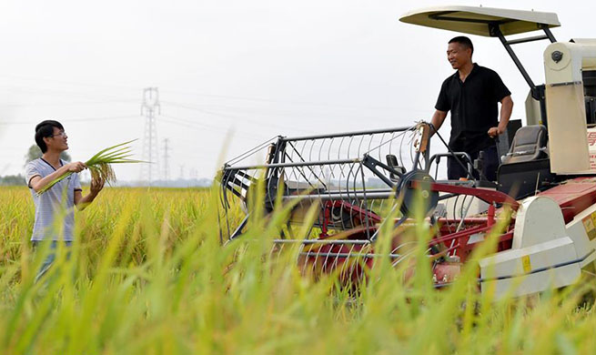 Pic story: rice growers harvest middle-season rice in Nanchang, east China's Jiangxi