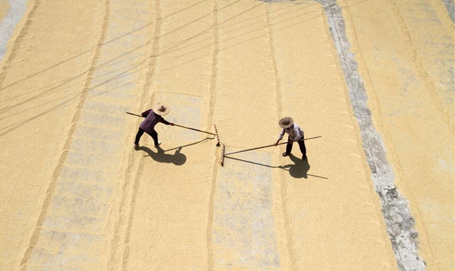 In pics: China's harvest season