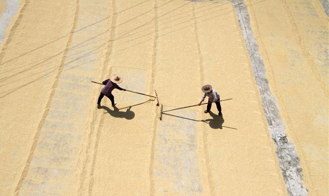 In pics: China's harvest season