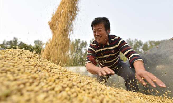 Family farms help increase income for local villagers in China's Shandong