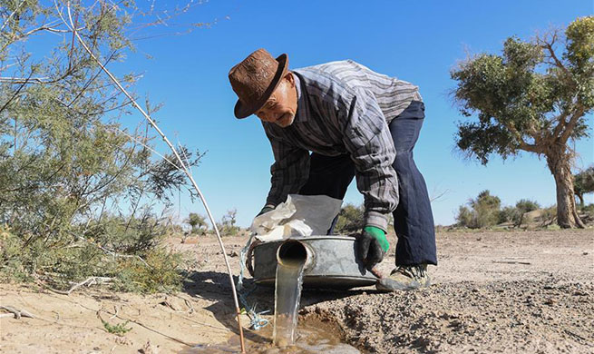 Pic story: 81-year-old herdsman takes care of desert poplar trees in China's Inner Mongolia