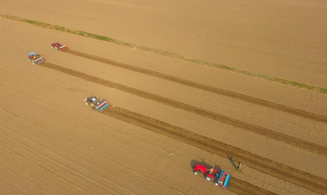 Farmers begin to sow wheat seeds in Shandong as autumn arrives