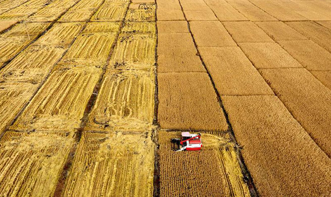 Harvesters work in paddy field in N China