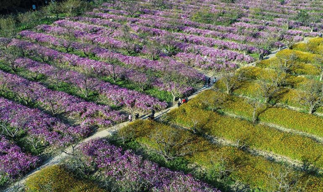 Tourists visit garden of cosmoses in China's Jiangsu