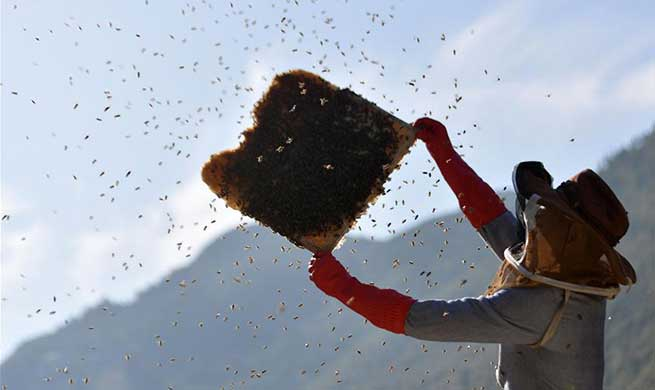 Pic story of bee farmer in China's Hubei