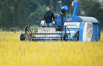 Pic story: Ji Genlan's dream of planting rice mechanically